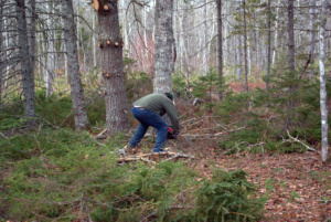 A man cutting down a tree