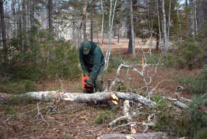 A tree being cut up for fire wood.